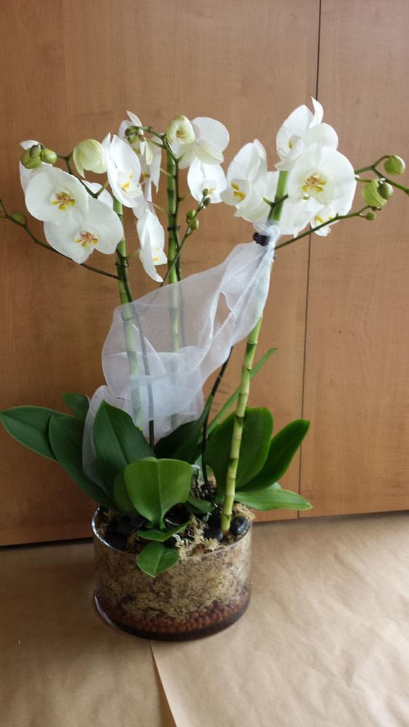 Orchidées Plantes Nos créations  Fleuriste ORCHIS fleuriste Bois d'Arcy 78390  # Fleuriste Bois D Arcy