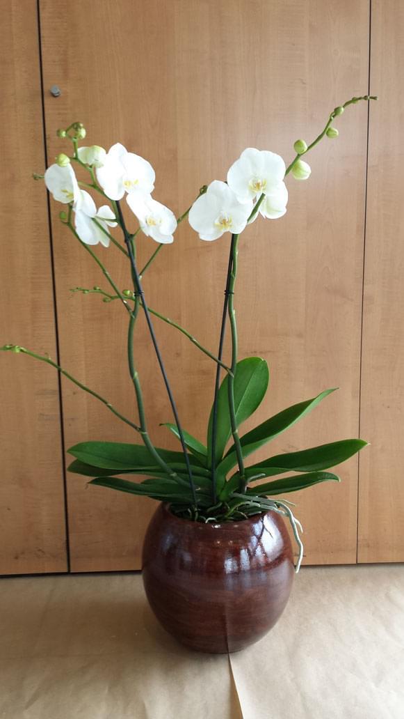 orchidee fleuriste bois d arcy 4 55502. Black Bedroom Furniture Sets. Home Design Ideas