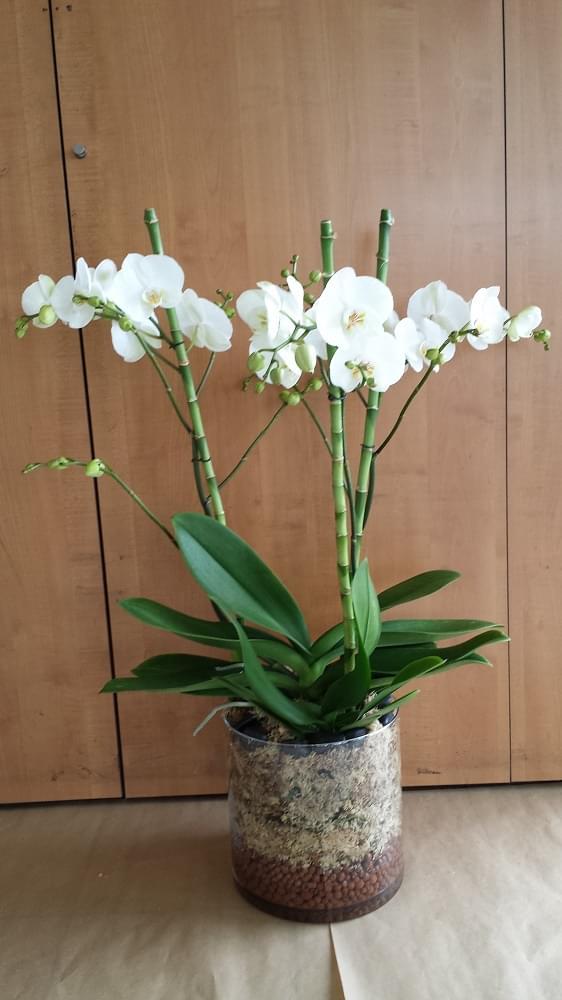 orchidee fleuriste bois d arcy 5 55515. Black Bedroom Furniture Sets. Home Design Ideas
