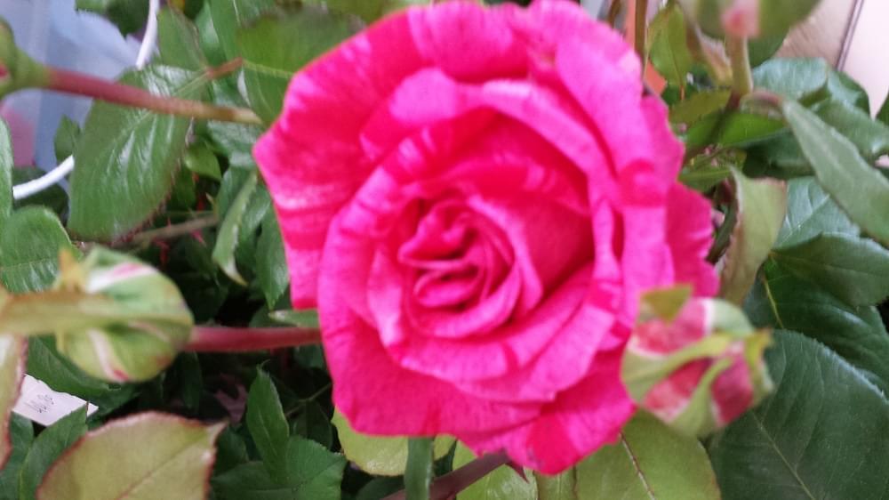 Plantes Nos créations  Fleuriste ORCHIS fleuriste Bois d'Arcy 78390 Compositions et  # Fleuriste Bois D Arcy