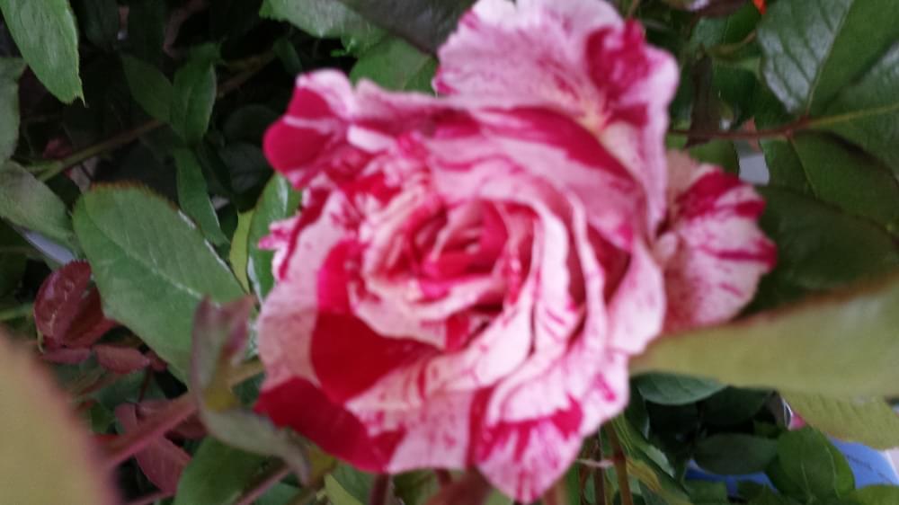 Plantes  Nos créationsFleuriste ORCHIS  fleuriste  ~ Leclerc Voyage Bois D Arcy